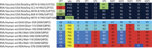 Genomic constellations of the reassortant RVA strains of RV5 and the G8 RVA strains analysed in this study.Gene segments of typical human DS-1-like RVA origin are coloured red, the human P[6] VP4 genotype is coloured yellow, and different shades of blue are used to indicate gene segments of distinct animal (most likely bovine or similar) origin.