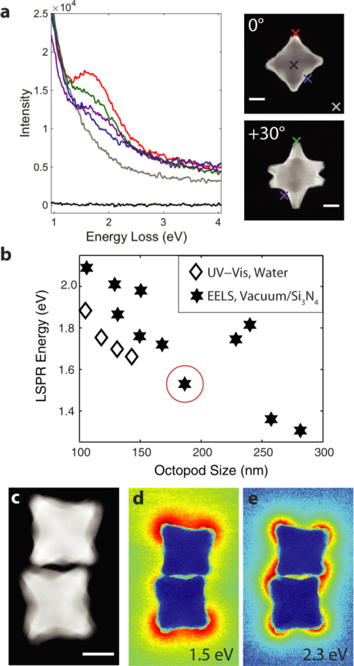 EELS of Au/Pd octopods, size dependence of the LSPR energy and plasmoncoupling.(a) Monochromated STEM-EEL spectra at the different positions markedon the right HAADF-STEM images for the same particle tilted 0°and +30°. (b) Correlation between size (face diagonal)and energy of the lowest energy LSPR; the particle shown in a iscircled in red. UV-Vis data from ref. 8(c) HAADF-STEM image of an octopod dimer. (d,e)Reconstructed EFTEM images with a 0.2 eV slit centered at 1.5and 2.3 eV. Scale bars, 50 nm.