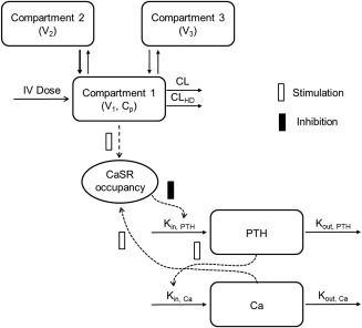 Schematic of the pharmacokinetic/pharmacodynamic (PK/PD) model structure. Kin,PTH and Kout,PTH: the zero‐order production rate of parathyroid hormone (PTH) and the first‐order elimination rate constant for PTH, respectively. ρ0: the calcium (Ca)/calcium‐sensing receptor (CaSR) occupancy at baseline λ: a constant determining the strength of the effect of changes in ρ on PTH production Kin,Ca and Kout,Ca: the zero‐order production rate of Ca and the first‐order elimination rate for Ca, respectively. S, the slope relating changes in PTH from baseline to Ca production; Ki, the equilibrium dissociation constant for etelcalcetide at the CaSR; KD, the equilibrium dissociation constant for Ca at the CaSR; α, the cooperativity constant; Cp, etelcalcetide plasma concentration.