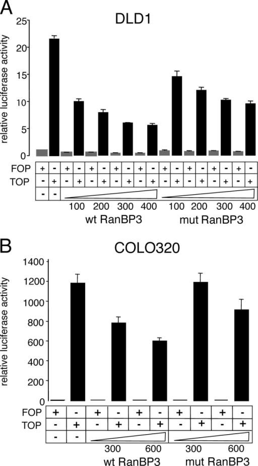 RanBP3 antagonizes Wnt/β-catenin transactivation in APC-mutated colon carcinoma cells. Luciferase assay showing that RanBP3 inhibits β-catenin–mediated transactivation in colon carcinoma cell lines DLD1 and COLO320. (A) APC type I truncated human colon carcinoma cell line DLD1 (APC 1–1417) was transfected with luciferase reporter constructs and increasing amounts of RanBP3 expression constructs as indicated. DLD1 cells express a truncated APC protein that lacks all its COOH-terminal NESs. (B) Luciferase reporter assay as in A, performed in the APC type I truncated human colon carcinoma cell line COLO320 (APC 1–811). These cells express a short APC protein that lacks all β-catenin binding and regulatory sites. Relative luciferase activity was measured 48 h after transfection. Error bars show SDs of a representative experiment.