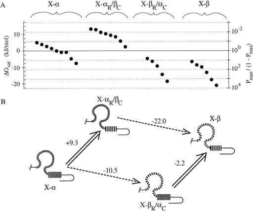Analysis of cAMP activation data for chimeras using a thermodynamic linkage cycle. (A) Efficacies of cAMP activation for all single-channel patches in this study are plotted using the same axes as in Fig. 6 A; each solid point plots data obtained from an individual patch from a distinct oocyte. (B) BDs of four chimeras arranged at the corners of the linkage cycle. Wide arrows represent replacements of fCNG2 C-helix by rCNG5 C-helix; dashed arrows represent replacements of fCNG2 roll subdomain by rCNG5 subdomain. For each replacement, ΔΔGsat,cAMP (defined as the change in ΔGsat,cAMP that results from performing that replacement) is shown, in units of kJ/mol. The independence hypothesis fails because parallel sides of the cycle have different values of ΔΔGsat,cAMP.