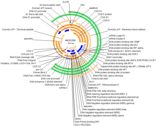 The highly annotated reference sequence (AM282986) in Genbank format visualized by VectorNTI.
