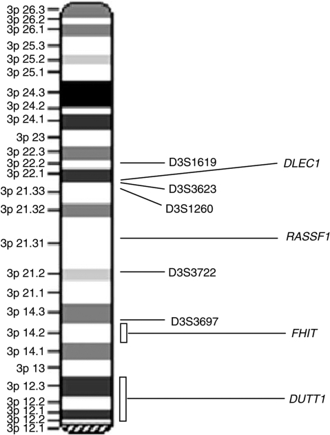 fig1 relationship between 3p deletions and telomerase