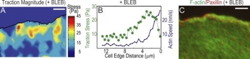 Inhibition of myosin II activity constrains traction to the lamellipodium. (A–C) Cells were treated with 50 μM blebbistatin (+BLEB). (A) Heat scale plot of traction stress magnitude. (B) Mean traction stress (green) and F-actin speed (blue) as a function of distance from leading cell edge. (C) Immunofluorescence image of paxillin (red) and F-actin (green). Bars, 5 μm.