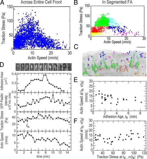"Traction stress is biphasically correlated with F-actin speed in FAs. (A) Traction stress versus F-actin speed for all points throughout the cell front over 25 frames of a time-lapse movie. (B) Subset of traction stress versus F-actin speed from A for data located within segmented FAs. Data were grouped by F-actin speed (greater or less than 10 nm/s) and three values of traction stress (<20, 20–50, and >50 Pa) to obtain six ""stress-speed"" groups identified by different colors/symbols. (C) Inverted GFP-paxillin image with spatial location of stress-speed data groups plotted in B (Video 4, available at http://www.jcb.org/cgi/content/full/jcb.200810060/DC1). Bar, 3 μm. (D, top) Montage of GFP-paxillin images of a single FA over 15 min (Video 5). For each time point, the integrated area (second row), GFP-paxillin intensity (third row), traction stress (fourth row), and local F-actin speed (bottom) were determined. In the fourth row, the dashed line indicates 75% of maximum stress; the arrow indicates time (ts) when traction stress exceeds this threshold. (E) F-actin speed at ts (v(ts)) as a function of ts. Mean of v(ts) = 12.7 ± 3 nm/s. Mean of ts = 3 ± 2 min. (F) v(ts) as a function of traction stress at ts, σ(ts). Mean of σ(ts) = 65 ± 28 Pa. Data in E and F are from 26 FAs in four cells."
