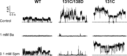 Currents from WT, I131C/I138D, and I131C that resolve single-channel openings are consistent with findings from macroscopic recordings. Shown here are segments from recordings of WT, I131C/I138D, and I131C at +100 mV with the indicated solutions in the bath.