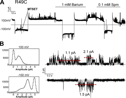 Continuous recording of R49C held at +100 and −100 mV. 0.1 mM MTSET solution was applied as shown by the arrow, and solution changes were made at the indicated bars. Below are all-points histograms of the recording above with representative traces at +100 and −100 mV. The red dashed lines indicate current amplitudes that correspond with peaks in the histograms.