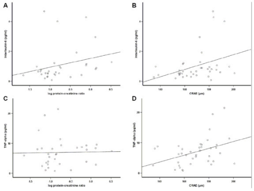 Bivariate correlations of Interleukin-6 (IL-6) and TNF-α with proteinuria and retinal artery caliber in patients with type 2 diabetes and nephropathy: A) IL-6 and proteinuria, B) IL-6 and retinal artery caliber, C) TNF-α and proteinuria and D) TNF-α and retinal artery caliber. We observed significant positive correlations for A) r = 0.39, B) r = 0.42 and D) r = 0.41. All correlations are given as calculated by Spearman correlation coefficient.