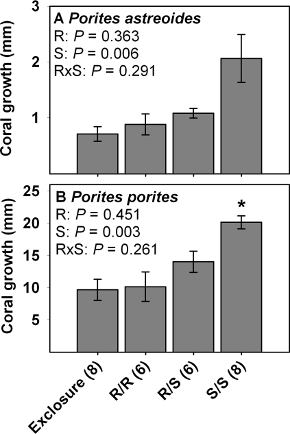 Skeletal growth (mean ± SE) of corals at the end of Year 1.Data are for (A) Porites astreoides and (B) Porites porites. R  =  redband parrotfish and S  =  ocean surgeonfish. Statistics are from two-factor ANOVA. * indicates a single-herbivore treatment that differs from the mixed-herbivore treatment as determined via resampling statistics. Sample size is in parenthesis next to each treatment.