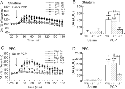 Effects of acute PCP on DAex in the striatum and PFC in wildtype, GluRε1−/−, and GluRε4−/− mice.(A, C) Temporal pattern of DAex before and after s.c. saline (Sal) or PCP (3 mg/kg) injection. The arrows indicate the drug injection time. Each point represents the mean ± SEM of the percentage of DAex baseline. (B, D) Histogram representing the mean AUC ± SEM of DAex during the 180 min period after saline or PCP injection (n = 5–11). ***p<0.001, compared with saline group of the same genotype; #p<0.05, ##p<0.01, comparisons between genotypes in the same drug treatment (two-way ANOVA followed by Fisher's PLSD post hoc test).