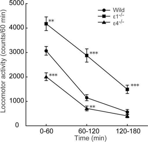 Locomotor activity in wildtype, GluRε1−/−, and GluRε4−/− mice in a novel environment.Locomotor activity was measured for 180 min. Each point represents the mean ± SEM (n = 34–50). *p<0.05, **p<0.01, ***p<0.001, compared with wildtype mice (one-way ANOVA followed by Fisher's PLSD post hoc test).