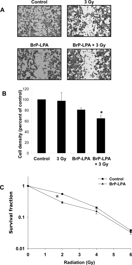Inhibition of ATX and LPA receptors attenuates migration and enhances cell death in irradiated GL261 cells.(A, B) Mouse glioma GL261 cells were plated on 60 mm plates and allowed to grow to 70% confluency. Plates were scraped with a pipette tip to create a scratch devoid of cells and treated with vehicle control or 5 µM BrP-LPA for 45 min before irradiation with 3 Gy. After 24 h, cells were fixed and stained with methylene blue. Migrated cells were counted and normalized to surrounding cell density per HPF. Shown are representative photomicrographs (A) and a bar graph (B) representing the mean percentages of migrating cells relative to corresponding controls with SEM from three experiments; * p<0.05. (C) For clonogenic survival assay, GL261 cells were plated and allowed to attach. After 6 h, cells were treated vehicle control or with 5 µM BrP-LPA for 45 min and irradiated with 0, 2, 4, and 6 Gy. After 10 days, surviving colonies (>50 cells) were counted and normalized for plating efficiency. Shown is the clonogenic survival curve and mean surviving fractions and SEM from three experiments; * p<0.05.