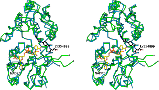 Stereo view Cα trace showing the superposition of a subunit of LmDHCH (green) with an equivalent from HsDHCH (marine) ternary complex with NADP+ (yellow) and LY354899 (black) (PDB code 1DIB). In both cases a loop that remains disordered is marked with two asterisks.