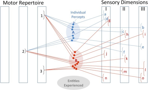 Bayesian representation. The internal representations of entities A and B consist of the previously experienced associations of various motor behaviors with various sensory feedback. The motor repertoire consists of discrete types of movements with continuously adjustable parameters; the sensory dimensions represent processed sensations with continuous ranges of values. Discrimination and identification of entities depends on finding motor-sensory associations that distinguish among the alternatives that are currently most probable. When explored by motor strategy 1, entities A and B result in overlapping sensory percepts a, b, c and g, h, i, respectively. When explored by motor strategy 2, the resulting percepts are non-overlapping for two of the three sensory dimensions (d, e vs. j, l), so this is the better exploratory strategy to pursue. Previous experience has also associated entity B with an affordance consisting of the tendency to produce sensory percepts n, m, o when handled according to motor strategy 3. Once a new object has been identified as entity B (or sufficiently close to it), it is immediately obvious that a behavioral result associated with sensory percepts n, m, and o can be obtained by generating motor strategy 3.