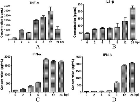 Concentration kinetics of TNF-α (A), IL-1β (B), IFN-α (C) and IFN-β (D) after virus infection. PAMs were infected with SIV (A/Swine/Shandong/3/2005) at a multiplicity of infection of 5. Mock-treated cells received virus-free medium. Culture supernatants were harvested at 0, 2, 4, 6, 8, 12, and 24 hpi. Data are presented as means ± SEM (n = 3). Results are representative of 3 independent experiments.