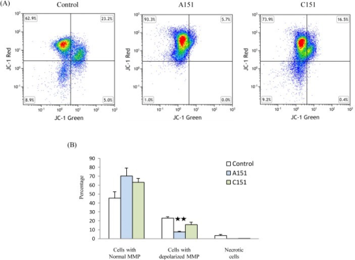 A151 reduced depolarization of mitochondrial membrane potential (MMP) in BMDM subjected to LPS and OGD.(A) FACS analysis of cells stained with JC-1. (B) The percentage of cells with depolarized MMP was reduced by A151 treatment. Data are presented as mean ± SEM from three replicates representative of three independent experiments (**, p < 0.05 compared with control or C151 treatment).