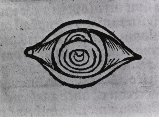 <p>View of an eye.</p>