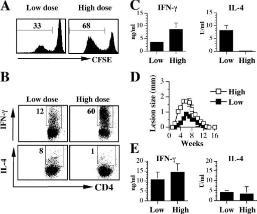 Parasite dose influences the development of CD4+ T cell responses in vivo. (A) Antigen-specific proliferation by CD4+ T cells is diminished in low dose–infected mice. B6 mice were infected intradermally with a low (103) or high (106) dose of L. major. 3 wk after infection, mice were killed and cells isolated from the retromaxillary draining lymph node (dLN) were CFSE labeled, stimulated for 5 d with SLA, and analyzed for proliferation by flow cytometry by gating on live CD4+ cells. (B) Low dose L. major infection induces an early CD4+ Th2 response. Cells from A above were also stained for intracellular IFN-γ and IL-4. (C) Levels of IFN-γ and IL-4 in 72-h culture supernatant fluids of lymph node cells from A above. (D and E) The early low dose–induced Th2 response in B6 mice is transient. B6 mice infected with a low or high dose of L. major were monitored weekly for the development and progression of cutaneous lesion (D). 16 wk after infection and resolution of lesion, mice were killed and cells from the dLN were stimulated with SLA for 72 h. The supernatant fluid was then assayed for IFN-γ and IL-4 by ELISA (E). Representative data from three experiments with similar results are presented.