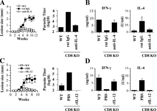 CD8+ T cells are not required for healing a low dose infection if Th2 cell development is blocked. (A) Anti–IL-4 mAb promotes healing in low dose–infected CD8-deficient mice. CD8-deficient mice infected with a low dose of L. major were injected intraperitoneally with 2 mg anti–IL-4 mAb (○) or control rat IgG (▪) at the time of infection and weekly thereafter for 3 wk. Mice were monitored weekly for lesion size and killed at 11 wk to determine parasite burden. (B) Anti–IL-4 mAb treatment blocks the low dose–induced Th2 response. At the time of death, dLN cells were stimulated with SLA and the supernatant fluids were assayed for IFN-γ and IL-4 by ELISA. (C) IL-12 promotes healing in low dose–infected CD8-deficient mice. CD8-deficient mice were infected with a low dose of L. major resuspended in 0.5 μg IL-12. Infected mice received additional injections of 0.5 μg IL-12 or PBS intraperitoneally on days 3 and 6, and lesion size was monitored weekly. 11 wk after infection, mice were killed to estimate parasite burden in the ear. (D) IFN-γ and IL-4 production by dLN cells from IL-12– and PBS-treated mice after in vitro stimulation with SLA. Data presented are a representative of two experiments with similar results.