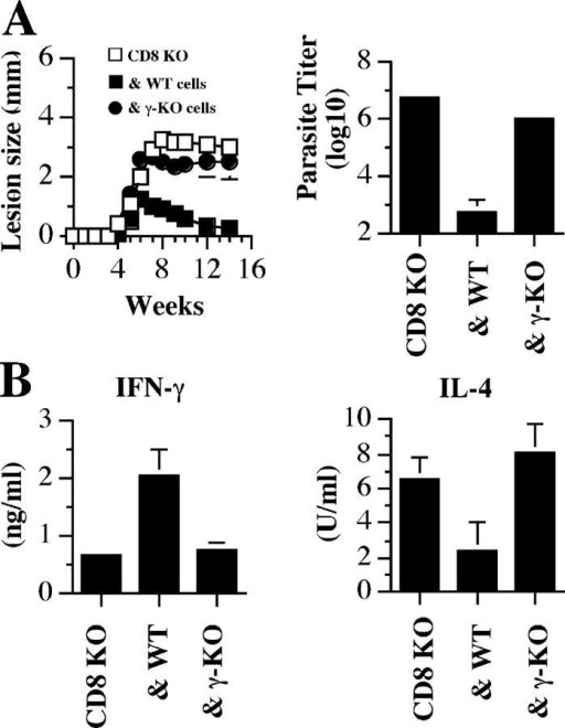 The protective effect of CD8+ T cells is mediated by IFN-γ. (A) CD8-deficient mice were given PBS (CD8 KO) or 107 purified CD8+ T cells from B6 (& WT) or IFN-γ–deficient (& γ-KO) mice, and infected with a low dose of L. major the next day. The course of lesion progression was monitored and 14 wk after infection mice were killed to determine parasite burden. (B) CD8+ T cells from WT, but not IFN-γ–deficient, mice inhibit the low dose–induced Th2 response. At the time of death, dLN cells were stimulated with SLA for 72 h and the supernatant fluids were assayed for IFN-γ and IL-4 production by ELISA. Data presented are a representative of two experiments with similar results.