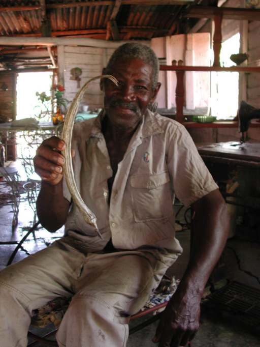 Haitian with a dried fruit of Abelmoschus esculentus from his homegarden (G. Volpato).
