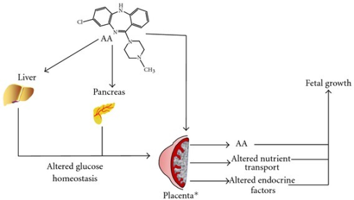 Atypical antipsychotics may impact fetal growth, by altering placental function. Atypical antipsychotics (AA) such as Clozapine are known to effect liver and pancreas function. Such effects can result in altered systemic glucose levels. During pregnancy, this can result in gestational diabetes or contribute to increased nutrient transport across the placenta. In addition, AA can be directly transported across the maternal-fetal interface and potentially impact fetal metabolic balance. However, AAs in the maternal system could impact placental development or function and alter the release of endocrine factors which would impact on fetal growth and development. *Adapted from [72].