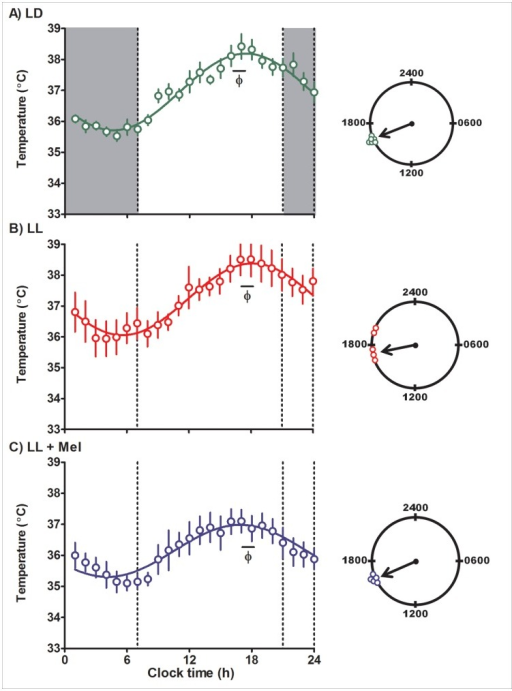 Mean ± SE temperature in pregnant capuchin monkeys 96 hours before delivery.Temperature was measured at 15 min intervals by telemetry. Integrated one h values were used to depict the rhythm. LD: females maintained in light:dark 14∶10 during pregnancy; LL: females maintained in constant light during pregnancy; LL+M: LL females receiving a daily melatonin replacement at 1800 h. Shaded bars represent light off. Φ indicates the acrophase. The continuous line represents the theoretical 24-h cosinor function fitting the data. The clocks at the right of the figure show the distribution of acrophases of the individual temperature rhythms in each group of females. An arrow denotes the timing of the mean acrophase.