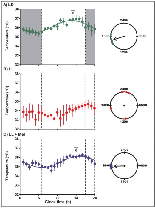 Mean ± SE circadian temperature rhythm in capuchin monkey newborns at 4–6 days of age.Temperature was measured at 15 min intervals by telemetry. Integrated one h values were used to depict the rhythm. LD: newborns from mothers kept in light:dark 14∶10 during pregnancy and reared in LD (n = 6); LL: newborn from mothers maintained in constant light during pregnancy and reared in LL (n = 5); LL+M: newborn from LL mother receiving a daily melatonin replacement at 1800 hours during pregnancy and reared in LL (n = 5). Shaded bars represent light off. Φ indicates the acrophase. The continuous line represents the theoretical 24-h cosinor function fitting the data. The mean data fits a 24-h cosine function (R2 0.83 and 0.82, LD and LL +Mel newborns, respectively).The clocks at the right of the figure show the distribution of acrophases of the individual temperature rhythms in each group of newborns. An arrow denotes the timing of the mean acrophase.