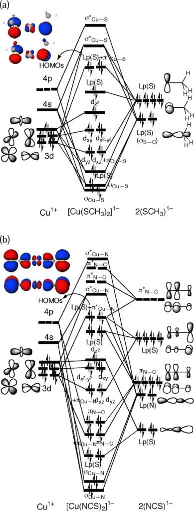 Schematic Kohn–Sham molecular orbitalinteraction diagramsbased on M06/DZVP2 calculations (a) between Cu+ and SCH3–and the HOMOs of [Cu(SCH3)2]1– and (b) between Cu+ and NCS–and the HOMOs of [Cu(NCS)2]1–.