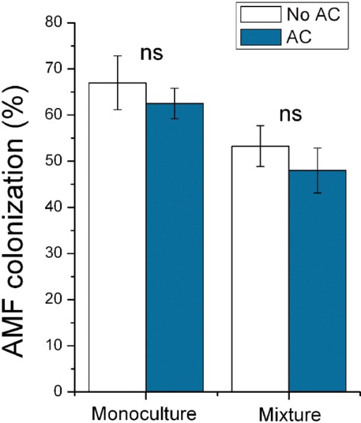 Effects of AC treatments on AMF colonization of K. striata (experiment 3).AMF colonization of K. striata under monoculture or mixture as affected by AC treatments in experiment 3. Values are means ± SE. For comparison of paired bars (No AC vs. AC), ns indicates not significant.