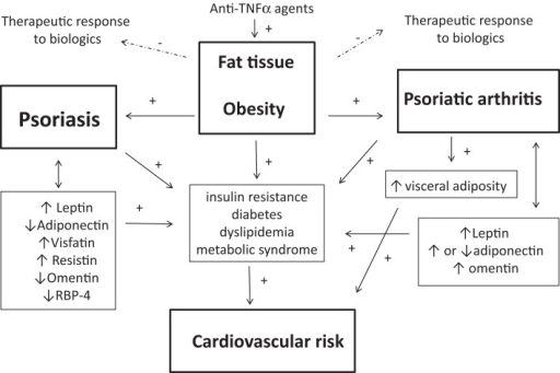 Interrelationships between fat tissue, psoriasis (Pso), and psoriatic arthritis (PsA) are shown. Obesity is a predisposing factor the development of both Pso and PsA. Pso and PsA are associated with obesity-related complications such as metabolic syndrome, dyslipidemia, diabetes, or insulin resistance, which all enhance the cardiovascular (CV) risk. Body composition is disturbed in Pso or PsA, especially in patients with PsA who have an excess of abdominal adiposity, contributing to increase the risk of metabolic syndrome and CV diseases. Adipokines may link the adipose tissue to the obesity-related complications of Pso and PsA: altered circulating levels of the adipokines leptin, adiponectin, visfatin, resistin omentin, and retinol-binding protein-4 (RBP-4) have been found in patients with Pso or PsA. Leptin has pro-inflammatory effects and may contribute to skin and joint inflammation. Adiponectin promotes insulin sensitivity and its reduced level in Pso may drive insulin resistance and may lead to impaired cardiac and vascular protective effects, thus contributing to the CV risk. In addition, the excess of adipose tissue in Pso and PsA may compromise the therapeutic response to biological agents in Pso and PsA. Finally, anti-TNFα agents have been associated with weight gain in patients with Pso or PsA.