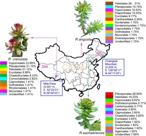 Location of three Rhodiola plants and distributions of endophytic fungi in their hosts.Endophytic fungi were affiliated to at least 11, 13, and 14 orders in R. crenulata, R. angusta, and R. sachalinensis, respectively, which exhibited high diversity.