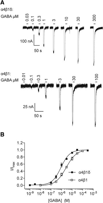 Examples of GABA-activated currents recorded from cDNA-injectedXenopusoocytes expressing α4β1δ and α4β1 receptors. A, Representative membrane currents for α4β1δ receptors (upper panel) and α4β1 receptors (lower panel) in response to increasing concentrations of GABA. The oocytes were voltage clamped at -60 mV. B, GABA concentration response curves for α4β1δ (n = 6) and α4β1(n = 5) receptors. All data points represent means ± SEMs.