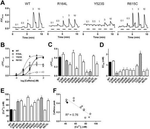 Caffeine-induced Ca2+ transients in cells expressing WT and mutant RyR1s.A–D. HEK293 cells expressing WT or mutant RyR1 channels were loaded with fluo-4 AM and stimulated by different concentrations (0.1–10 mM) of caffeine. Measurements were carried out at room temperature (RT). A. Representative traces of fluo-4 signals for WT and three mutants (R164L, Y523S and R615C). Caffeine was applied at the time points indicated by the short horizontal bars. Fluo-4 signals were normalized by Fmax (see Materials and Methods). B. The magnitude of the Ca2+ transients were plotted against caffeine concentrations and fitted to the dose-response curve. C and D. The maximum Ca2+ transients (C) and EC50 for caffeine (D) of WT (filled column), MH mutations (open columns) and MH/CCD mutations (hatched columns). Data are means ± SE (n = 78–150). E. HEK293 cells of WT (filled column), MH mutations (open columns) and MH/CCD mutations (hatched columns) were loaded with fura-2 AM and resting [Ca2+]i was determined. Data are means ± SE (n = 207–494). F. The maximum caffeine-induced Ca2+ transients correlate well with resting [Ca2+]i. (R2 = 0.76, dashed line).