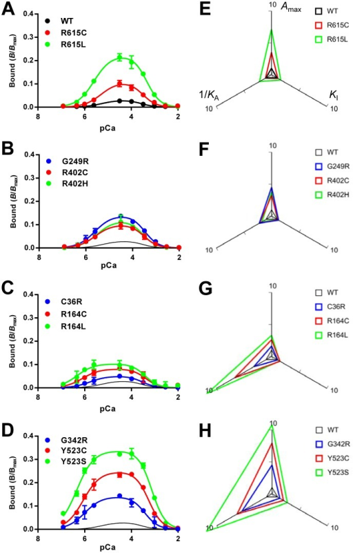 Ca2+-dependent [3H]ryanodine binding of WT and mutant RyR1s.A–D. Ca2+-dependent [3H]ryanodine binding was determined at 25°C in 0.17 M NaCl, 20 mM MOPSO, pH 6.8, 2 mM dithiothreitol, 1 mM AMP and various concentrations of Ca2+ buffered with 10 mM EGTA. Curves without data points in B–D indicate WT. Data are means ± SE (n = 3–5). Note that the mutants show greater [3H]ryanodine binding than WT. E–H. Activity profiles of the mutant channels. The three parameters, Amax, KA and KI, were obtained by fitting analysis (see Materials and Methods) and plotted on the radar charts relative to WT. 1/KA was used as the parameter for activating Ca2+ dissociation constants, in which a larger value represents higher sensitivity. Note that the size of the triangle represents the magnitude of the channel activity.