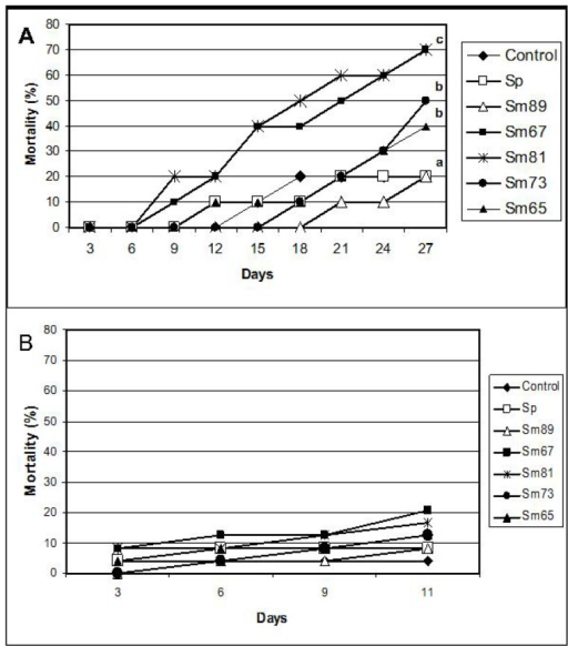 Mortality of larvae fed with the S. marcescens isolates. Panel A. P. blanchardi. Mortality was recorded during 27 days after oral inoculation. Control groups were fed with pieces of carrot alone and also with carrot containing the non-pathogenic bacterium Serratia plymuthica ATCC15928. No significant differences are indicated by the same letter above the lines (χ2, p < 0.01); n = 10. Panel B. Spodoptera frugiperda. Mortality was recorded during 11 days. Control groups were fed with an artificial diet where bacteria were replaced with the same amount of sterile water and S. plymuthica ATCC15928. No significant differences between treatments were observed (χ2, p < 0.05).