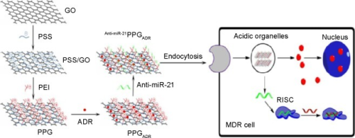 Fabrication of polyethylenimine poly(sodium 4-styrenesulfonate) graphene oxide delivery vehicle and MDR reversion. Reproduced from Zhi F, Dong H, Jia X, et al. Functionalized graphene oxide mediated adriamycin delivery and miR-21 gene silencing to overcome tumor multidrug resistance in vitro. Plos One. 2013;8(3):e60034.113Abbreviations: GO, graphene oxide; PLL, poly-l-lysine; PSS, poly(sodium 4-styrenesulfonate); PEI, polyethylenimine; PPG, poly(sodium 4-styrenesulfonate) (PSS)/GO; ADR, Adriamycin.