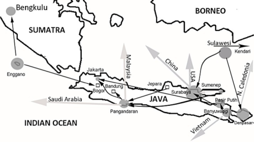 Shell trade networks.Protected marine molluscs shell trade networks in Java and Bali, Indonesia. Size of circles are proportional to the volume of trade: small = 10s, medium-100s, large-1000s and very large = 10,000s. Kendari is situated in south-central Sulawesi 800 km northeast of Bali.