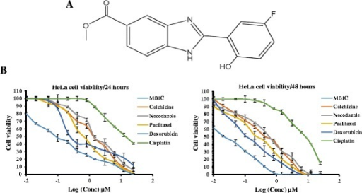 a Chemical Structure: Chemical structure of Methyl 2-(5-fluoro-2-hydroxyphenyl)-1H- benzo[d]imidazole-5-carboxylate (MBIC). b Inhibitory effect of MBIC against HeLa cell proliferation: Cell viability graph was generated for comparison of total relative cell viability (%) after MBIC and indicated conventional drugs treatment. Experiment was done in two time points (24 and 48 h) against HeLa cells. All results were expressed as total percentage of viable cells with mean ± SD of three independent experiments. (P < 0.05)