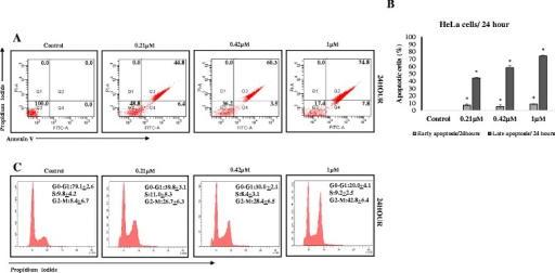 "a MBIC induced apoptosis in HeLa cells: Flow cytometry analysis of HeLa cells treated with various concentration of MBIC for 24 h was carried out. Representative figures show population of viable cells in Q3 (annexin V- PI-), early apoptotic cells in Q4 (annexin V+ PI-), late apoptotic cells in Q2 (annexin V+ PI+) and necrotic cells in Q1 (annexin V- PI+). Representative figure shows apoptosis induction of MBIC (0.21, 0.42 and 1 μM) against HeLa cells 24 h after treatment. b shows early and late induced apoptosis in bar chart for HeLa cells 24 h after treatment. Data were mean ± SD of three independent experiments. All the treatment groups were compared with control. ""*"" indicates statistically significant at P < 0.05. c MBIC induced G2-M arrest in HeLa cells: HeLa cells were treated with indicated concentrations of MBIC (0.21, 0.42 and 1 μM) for 24 h. Cells were permeabilized by ethanol and stained with PI. Cell cycle progression has been assessed by flow cytometry. Representative figures of cell cycle distribution (G0-G1, S, and G2-M) show accumulation of MBIC-treated cells in G2-M phase. HeLa cells were arrested in G2-M phase 24 h after MBIC treatment"