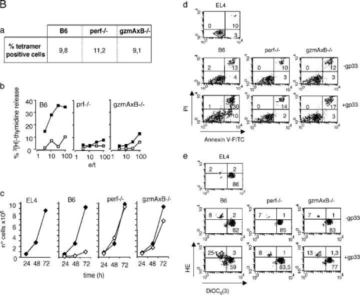 PS exposure, mitochondrial depolarization, and ROS generation is induced by gzmA−/− and gzmB−/− but not by perf−/− and gzmA×B−/− CTL. EL4.F15 cells were incubated with ex vivo virus-immune CD8+ cells (MACS selected, ≥95% CD8+ cells) from either B6, gzmA−/−, or gzmB−/− (A) or from B6, perf −/−, or gzmA×B−/− (B) mice, in the presence or absence of the LCMV peptide gp33. (Aa) percentage of virus-specific CD8+ cells, determined by staining with gp33-labeled tetramers (H-2Db; tet-PE). (Ab) EL4.F15 cells were incubated with effector cells for 4 h (open symbols, −gp33; closed symbols, +gp33) at different effector/target ratios, and DNA fragmentation was analyzed by 3H-thymidine release. (Ac and Ad) EL4.F15 cells were incubated with effector cells for 2 h at a 10:1 effector/target ratio. Subsequently, PS exposure on plasma membrane (annexin-V-FITC) and PI uptake (c) and, in parallel, ΔΨm loss (3,3-dihexyloxacarbocyanin [DiOC6(3)] staining) and ROS generation (2-hydroxiethidine [2-HE]; d) were analyzed by three-color flow cytometry in the cell population negative for CD8 expression (target cells). EL4.F15 cells were also incubated with 200 μM glyotoxin (c) or 200 μM carbonyl cyanide m-chlorophenylhydrazone (CCCP; d) as positive controls for PS exposure and ΔΨm loss, respectively. Numbers indicate percentage of cells in each quadrant. (Ae) EL4.F15 cells were incubated with effector cells for 30, 60, or 120 min at a 10:1 effector/target ratio, and PS exposure and PI uptake or ΔΨm loss and ROS generation were analyzed as described in Ac and Ad. Data presented are the mean of at least three independent experiments and are given as the difference of percentages in the presence versus the absence of gp33 ± SD. (B) a, same as Aa; b, same as Ab; c, target cell death (open symbols, −gp33; closed symbols, +gp33) was monitored after incubation of CML for 2 h at an effector/target cell ratio of 10:1 by the cell survival assay. Bd, same as Ac; Be, same as Ad.