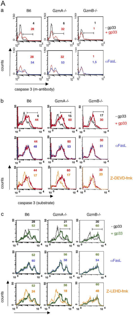 B6 and gzmA−/− but neither gzmB−/−, perf−/−, nor gzmA×B−/− CTL are able to induce caspase 3 and 9 activity. EL4.F15 cells were incubated with ex vivo virus-specific CD8+ cells (MACS selected, ≥95% CD8+ cells) from either B6, gzmA−/−, or gzmB−/− (A) or from B6, perf−/−, or gzmA×B−/− (B) mice (2 h, 10:1 effector/target ratio), in the presence (red and green) or absence (black) of the LCMV peptide gp33, as indicated. Activation of caspase 3 was monitored with either an FITC-labeled mAb against the active form of the enzyme (Aa and Ba) or the specific fluorescent substrates SRH-DEVD-fmk (Ab and Bb), by two-color flow cytometry in the cell population negative for CD8 expression (target cells) as described in Materials and methods. Similarly, activation of caspase 9 was monitored with the specific fluorescent substrates FAM-LEHD-fmk (Ac and Bc). CMLs were also developed in the presence of a blocking mAb anti-FasL, where indicated (Aa, bottom, dark blue; and Ab and Ac, middle, dark blue), and in the presence of the caspase 3 (100 μM Z-DEVD-fmk; b) or caspase 9 (100 μM Z-LEHD-fmk; c) inhibitors (Ab, Ac, Bb, and Bc, bottom, orange). Numbers correspond to the percentage of cells positive for the labeling in each case, indicated by the horizontal bars shown in the top panels.