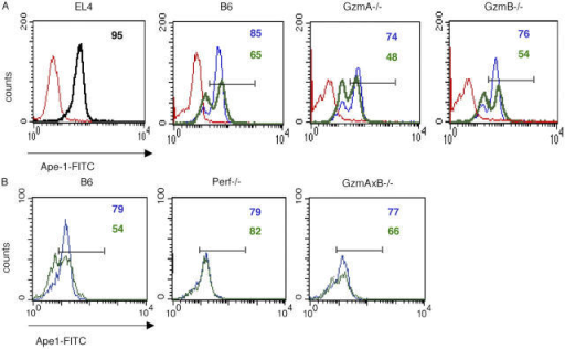 Ape-1 degradation is induced by B6, gzmA−/−, gzmB−/−, and gzmA×B−/− but not perf−/− CTL. EL4.F15 cells were incubated with ex vivo virus-specific CD8+ cells (MACS selected, ≥95% CD8+ cells) from wild-type B6, gzmA−/−, or gzmB−/− mice (A) or from perf−/− or gzmA×B−/− mice (B) for 4 h at a 10:1 effector/target ratio in the presence (green) or absence (blue) of gp33 peptide. Subsequently, Ape-1 expression was analyzed in the cell population negative for CD8 expression by two-color flow cytometry. Red histograms indicate the cells labeled with the control isotype antibody. Numbers correspond to the percentage of cells positive for the labeling in each case, indicated by the horizontal bars.
