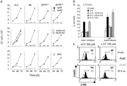 Cell death induced by B6, gzmA−/−, and gzmB−/− CTL is not affected by caspase inhibitors or ROS scavengers. (A) EL4.F15 cells were incubated with ex vivo LCMV-immune CD8+ T cells (MACS selected, ≥95% CD8+ cells) from B6, gzmA−/−, or gzmB−/− mice for 4 h at a 10:1 effector/target ratio, in the presence (opened symbols) or absence (closed symbols) of the viral protein gp33 (top panels). Alternatively, gp33-pulsed EL4.F15 cells were incubated with the respective effector cell populations in the presence of either 100 μM Z-VAD-fmk (square), 100 μM Z-DEVD-fmk (middle, triangle), or 15 mM NAC (bottom, circle). Subsequently, target cell death was monitored by propagating CML cultures at conditions unsuitable for CTL. (Ba) L1210.Fas cells were cultured in the presence or absence of αFas antibody (Jo-2; 1 μg/ml) for 20 h; cell cultures supplemented with Jo-2 were in addition treated with either Z-VAD-fmk or Z-DEVD-fmk (100 μM) or with 24-h SN of effector cell-target cell cultures (A; B6 CD8+ T cells +EL4.F15 + gp33). Cell death was analyzed by Trypan blue exclusion and results are expressed as the mean ± SD of two independent experiments. (Bb) EL4.F15 cells were cultured in the presence or absence of gliotoxin (100 or 200 μM) for 3 h; cell cultures supplemented with gliotoxin were in addition treated with either 15 mM NAC or with 24 h SN of effector cell-target cell cultures (A; B6 CD8+ T cells +EL4.F15 + gp33). Generation of ROS was analyzed by 2-HE staining. Data shown are representative of three independent experiments.