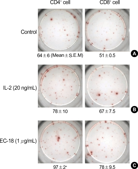 IL-2 secretion by 1-palmitoyl-2-linoleoyl-3-acetyl-rac-glycerol (EC-18) treated T-cells. Brown spots indicate IL-2 producing cells. Data are expressed as mean±S.E.M. *P<0.05 compared with the control group.