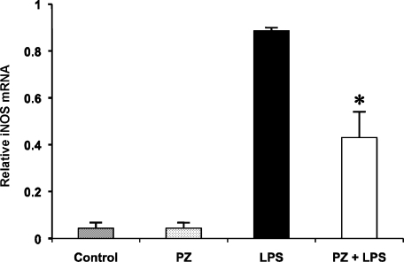Effect of PZ on the expression of iNOS mRNA in the mouse lung 6 h after LPS. PZ (100 mg/kg) was given to mice 2 h before LPS (40 mg/kg, i.p.) administration. The level of iNOS mRNA in the mouse lung was measured as described in Materials and Methods. Data points represent the means ± SE (n = 5). *p<0.05 vs LPS alone.
