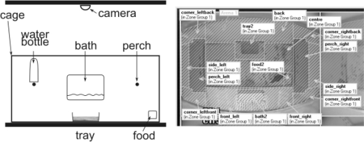 "Experimental set up.Left panel: side view of a cage with furnishings. Right panel: top view of a cage as seen on the video images. For the automatic tracking of the bird in the cage, distinct locations of the cage were allocated to areas of this image. Areas hatched in white were combined as ""peripheral locations"" for analysis (this must not be confused with the ""front"" and ""back"" section (not illustrated), where the full cage is split along its longitudinal axis)."