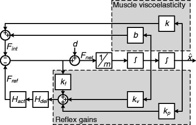 Lumped reflex gain model used to fit reflex gains onto the output of the perturbation experiments of the neuromusculoskeletal model. In this lumped model, the force disturbance d is applied to a single inertia m. Muscle viscoelasticity is represented by a stiffness k and viscosity b. Reflexive feedback is represented by a positional feedback gain kp, a velocity feedback gain kv and a force feedback gain kf. A single reflexive feedback neural time delay τdel is represented by Hdel. The first order muscle activation dynamics are Hact. Output of this lumped model is joint position