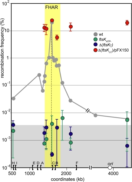 Preferential interaction with the FtsK high activity region requires all domains of FtsK.Same legend as Figure 2. The grey curve corresponds to ftsKwt strains and is redrawn from figure 2. Recombination frequencies were measured at chosen loci in different ftsK mutant: Green dots: ftsKATP-; blue dots: Δ(ftsKγ); red dots Δ(ftsKLC) strains producing FtsKC from plasmid pFX150 (Materials and methods). The yellow zone indicates extend of the FtsK high activity region and the grey zone the FtsK-independent recombination background (see Figure 2).
