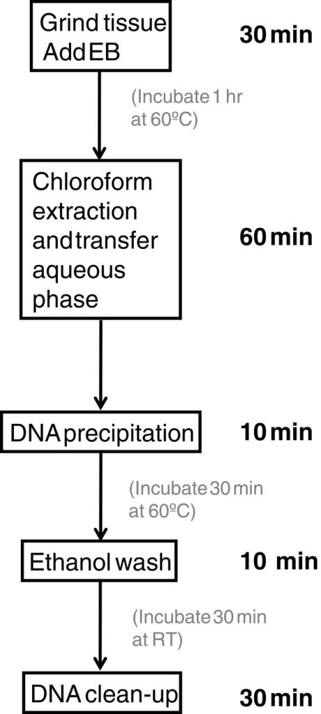 Flowchart of five major steps of the dna extraction met open i flowchart of five major steps of the dna extraction method it takes 2 h and ccuart Choice Image